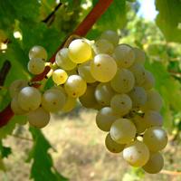 Vendita di Vini italiani online
