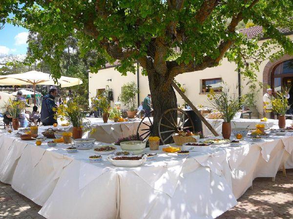 festa pensionamento sicilia - Gelso bianco secolare - Il Casale di Emma