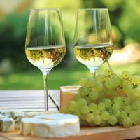 Vendita online di vini pregiati